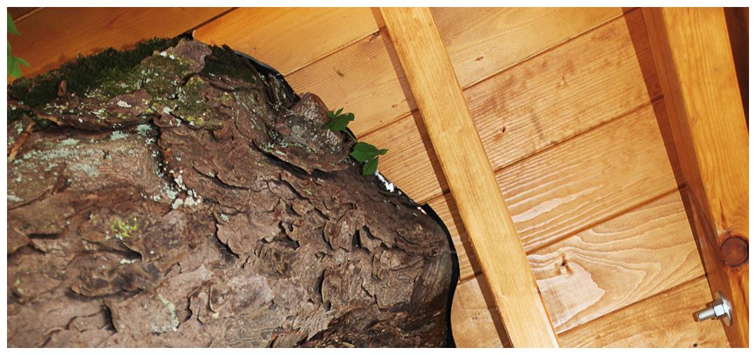 Sanierung und Umbau der Überdachung von Moser Holzbau | Innenansicht