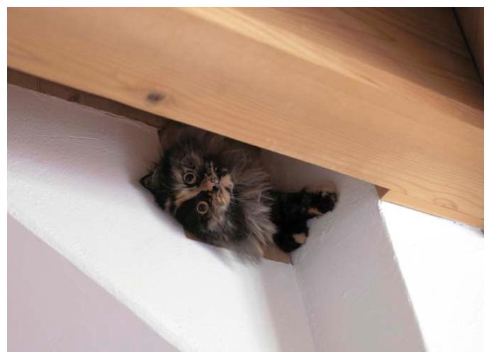 Katze im Innenraum vom Blockhaus