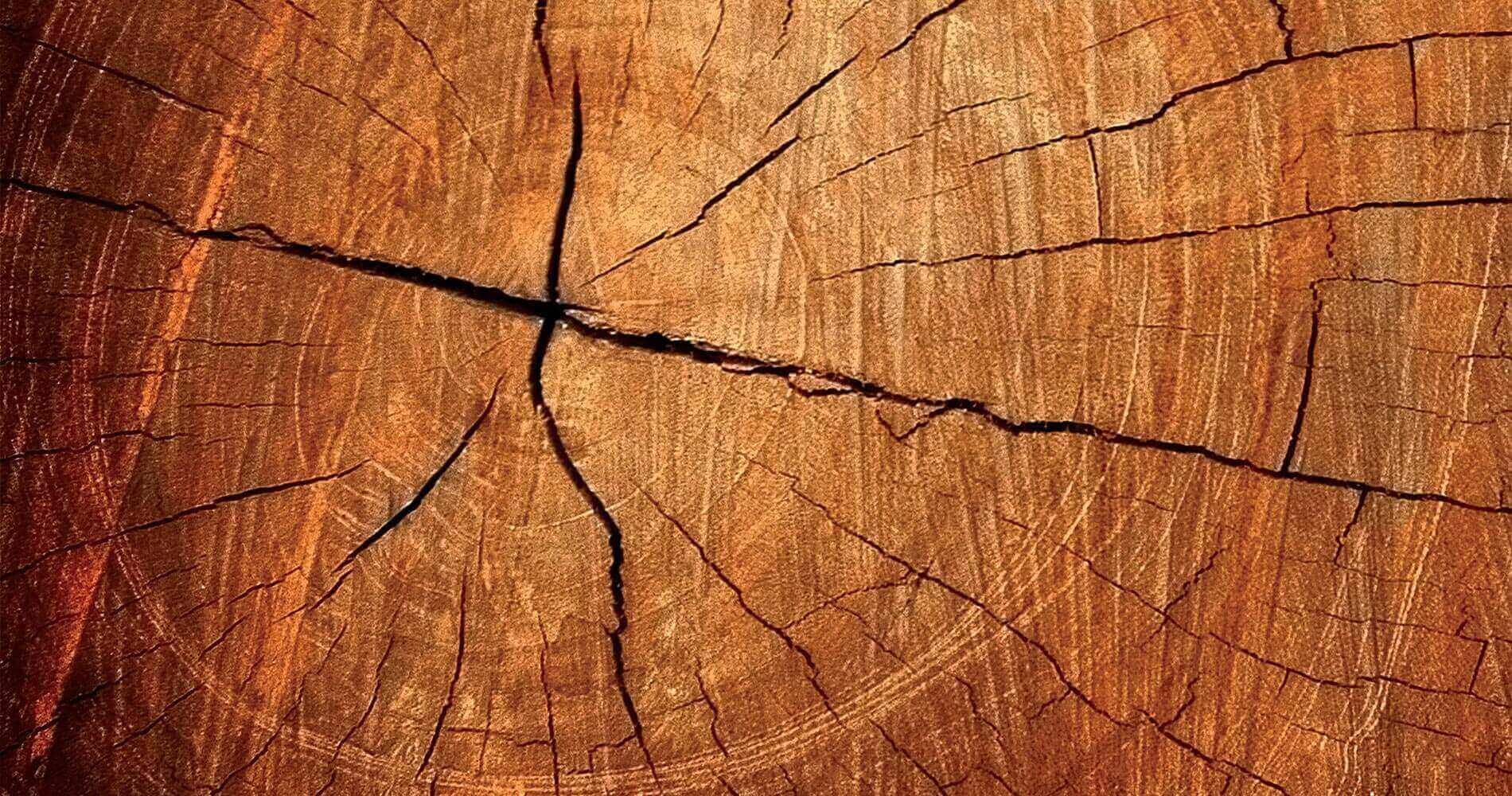 Massivholzbau_slider